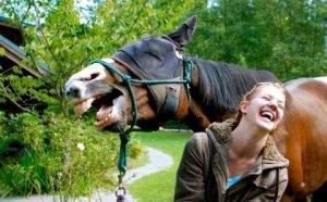 Horse Laugh